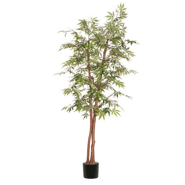Japanese Maple Deluxe Everyday Tree - 7 ft.