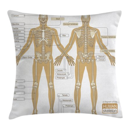Human Anatomy Throw Pillow Cushion Cover, Diagram of Human Skeleton System with Titled Main Parts of Body Joints Picture, Decorative Square Accent Pillow Case, 16 X 16 Inches, White Tan, by Ambesonne