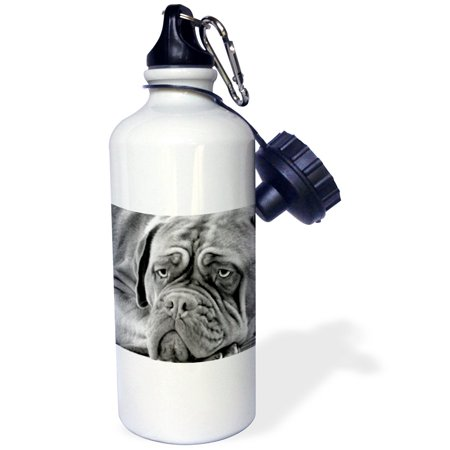 3dRose Dogue de Bordeaux, Sports Water Bottle, 21oz