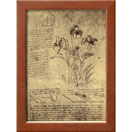 Drawing of Flowers and Diagrams by Leonardo da Vinci Framed Giclee ...