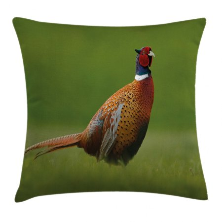 Bird Throw Pillow Cushion Cover, Common Pheasant with Long Tail on the Green Grass Meadow Habitat Czech Republic, Decorative Square Accent Pillow Case, 18 X 18 Inches, Green Orange Red, by Ambesonne Long Tail Bird