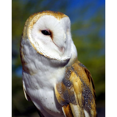 Barn Owl, Fine Art Photograph By: Douglas Taylor; One 22x28in Fine Art Paper Giclee Print - Owl Photo