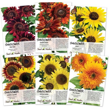 Seed Needs, Sunflower Seed Collection (6 Individual Seed Packets) Velvet Queen, Lemon Queen, Wild Yellow, Tall Teddy, Autumn Beauty & Red Sun