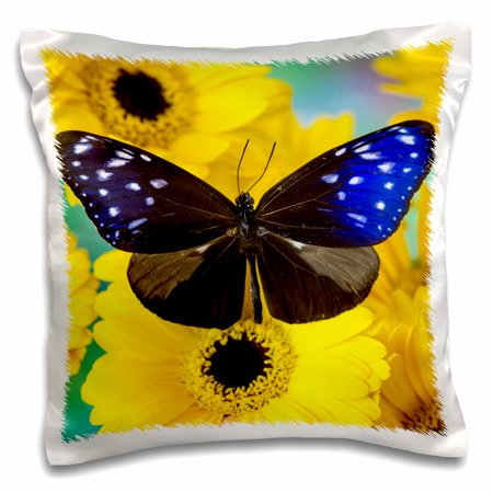 3dRose Butterfly the Striped Blue Crow, Euphoea mulcider. - Pillow Case, 16 by 16-inch