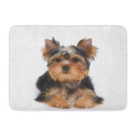 SIDONKU Dog One Puppy of The Yorkshire Terrier Lies on White Small Yorkie Adorable Doormat Floor Rug Bath Mat 23.6x15.7 (Small Floor Mat)