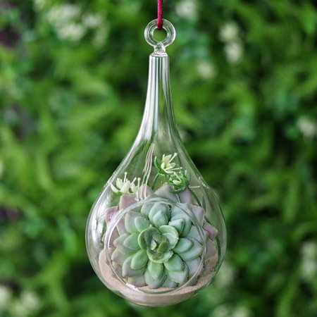 Efavormart 6 pcs Freefalling Teardrop Glass Terrarium / Decorative Clear Glass Globe