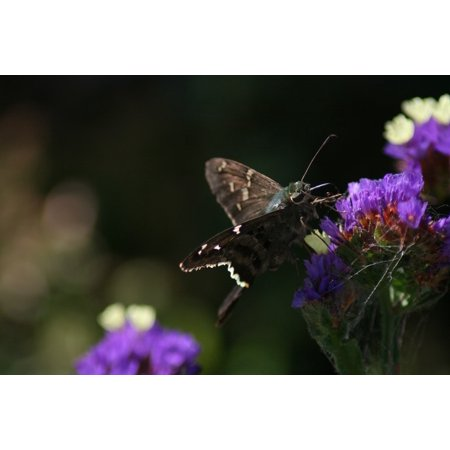 LAMINATED POSTER Cemetery Butterfly Polilla Close Up Flowe Macro Poster Print 24 x 36