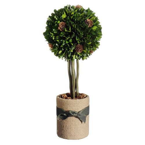 Silk Flower Depot Preserved Boxwood & Pine Cone Ball Round Topiary in Pot
