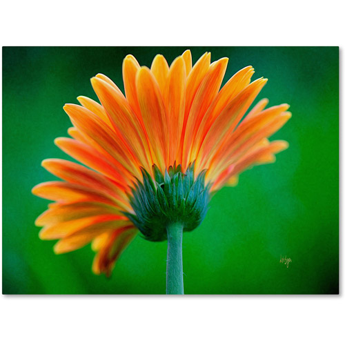 "Trademark Fine Art ""Orange Burst"" Canvas Art by Lois Bryan"