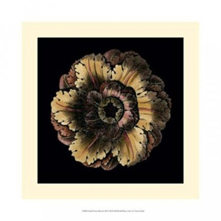 Small Classic Rosette III Poster Print by Vision studio (14 x 14)