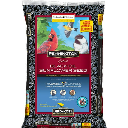 Pennington Select Black Oil Sunflower Wild Bird Seed and Feed, 50 Lbs (Sunflower Wild Bird Seed)