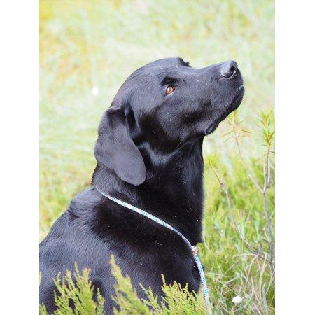 Canvas Print Water Labrador Retriever Black Dog Bird Hunting Stretched Canvas 10 x 14