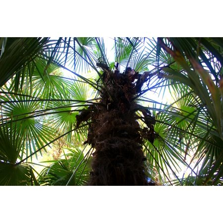 LAMINATED POSTER Palm Leaf Palm Tree Palm Trees Tree Green Plant Poster Print 24 x - Palm Tree Leaf