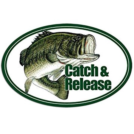 OVAL Largemouth Bass Catch & Release Sticker Decal (fish fishing lure) 3 x 5 inch