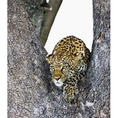 Posterazzi DPI1846232 Leopard Panthera Pardus Poster Print, 14 x 16 - image 1 de 1