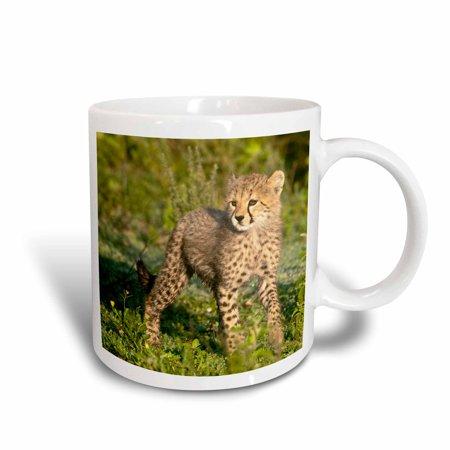 3dRose Tanzania, Cheetah, Ndutu, Ngorongoro -AF45 RBE0322 - Ralph H. Bendjebar, Ceramic Mug,