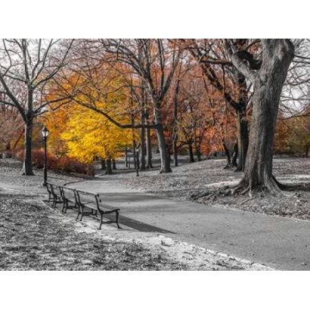 Pathway through Central Park New York Stretched Canvas - Assaf Frank (9 x 12)