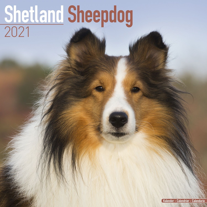 Shetland Sheepdog Calendar 2021   Shetland Sheepdog Dog Breed