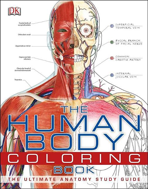 - The Human Body Coloring Book : The Ultimate Anatomy Study Guide (Paperback)  - Walmart.com - Walmart.com