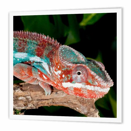 3Drose Rainbow Panther Chameleon  Lizard   Na02 Dno0692   David Northcott  Iron On Heat Transfer  6 By 6 Inch  For White Material