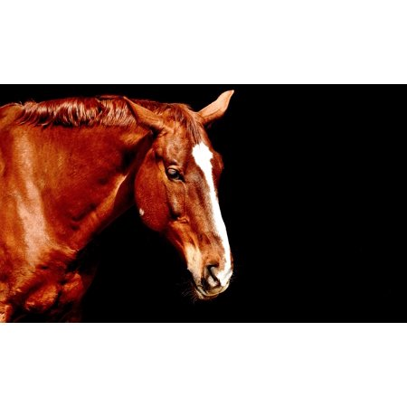 Laminated Poster Horse Brown Beautiful Portrait Animal Poster Print 24 x 36