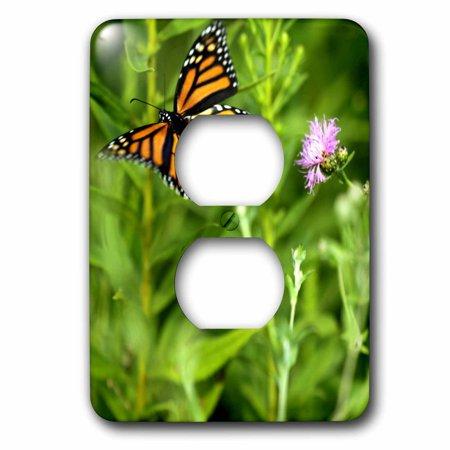 3dRose Butterfly Monarch Flowers Orange Purple Green Flight - 2 Plug Outlet Cover (lsp_27797_6) (Purple Butterfly Dart Flights)