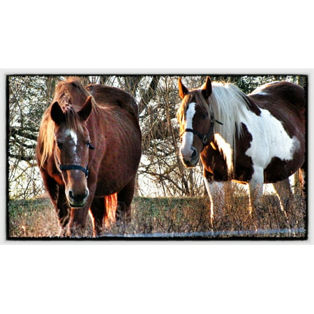 LAMINATED POSTER Brown Horses Spotted Grazing Brown And White Poster Print 24 x 36