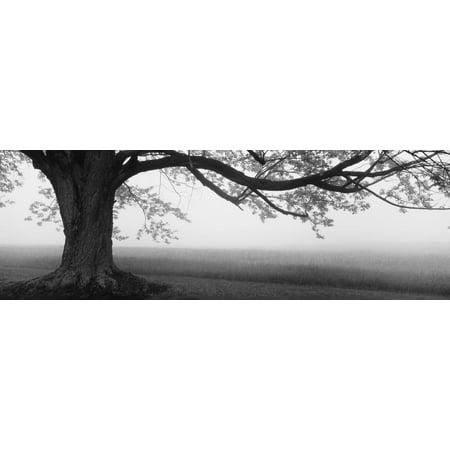 Tree in a Farm, Knox Farm State Park, East Aurora, New York State, USA Print Wall