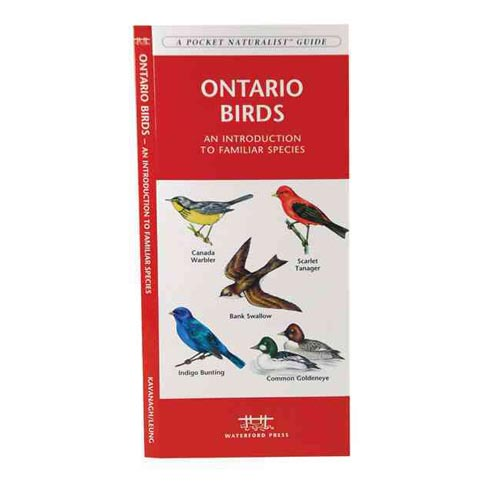 Ontario Birds: An Introduction To Familiar Species
