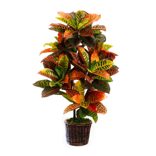 Dalmarko Designs Croton Floor Plant in Basket