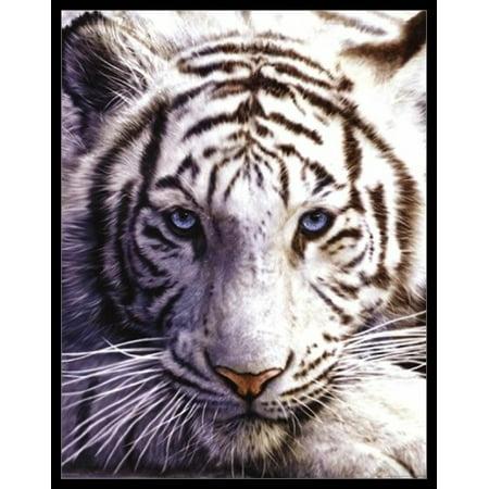 White Tiger Laminated & Framed Poster (16 X 20) 16' Deep Black Laminate