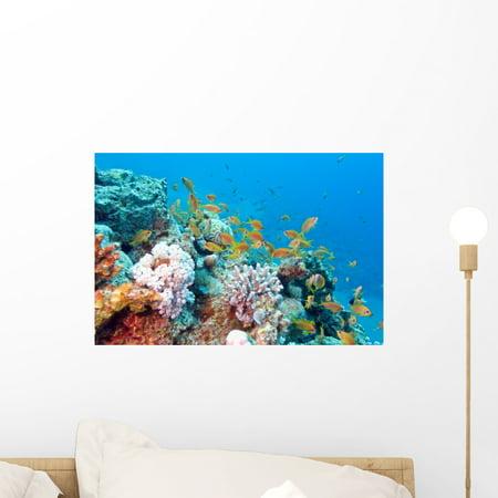 Coral Reef with Shoal Wall Mural Decal Sticker Wallmonkeys Peel Stick