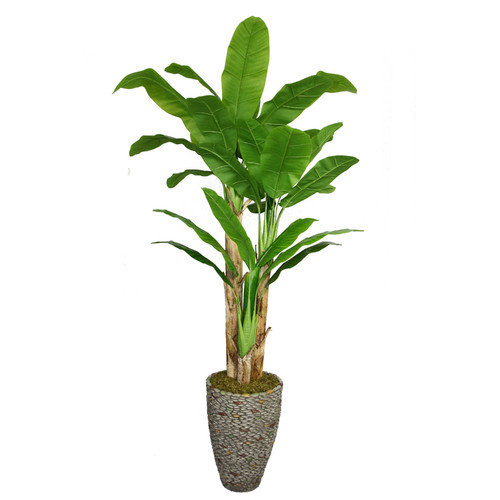 86-in Tall Banana Tree with Real Touch Leaves in 16-in Fiberstone Planter