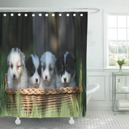 SUTTOM Puppy Dog Australian Shepherd Puppies Cute Aussie Breed Shower Curtain 60x72 inch - image 1 de 1
