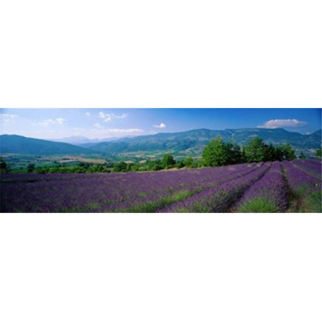 Flowers In Field  Lavender Field  La Drome Provence  France Poster Print by  - 36 x 12 - image 1 de 1