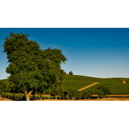 Framed Art For Your Wall Crop Sonoma Napa Valley Vineyard California 10x13 Frame