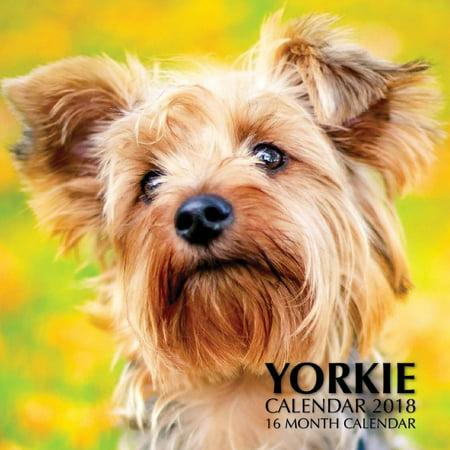 Calendar Cover - Yorkie Calendar 2018: 16 Month Calendar (Paperback)