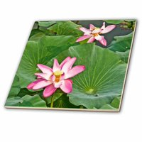 3dRose Pink Lotus Flowers and lily pads - Ceramic Tile, 6-inch