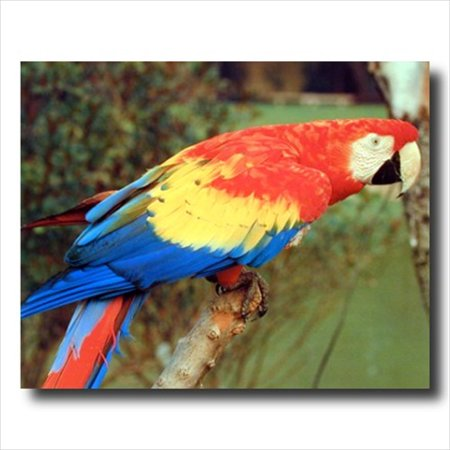 Tropical Macaw Parrot Bird Kid Wall Picture Art Print