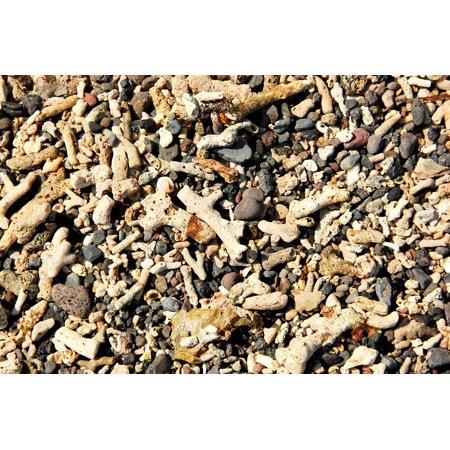 24 Coral Shell - LAMINATED POSTER Bali Coral Shells Sea Poster Print 24 x 36