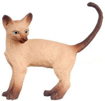 Dollhouse Cat, Siamese