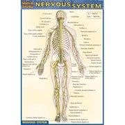 BarCharts- Inc. 9781572228214 Nervous System