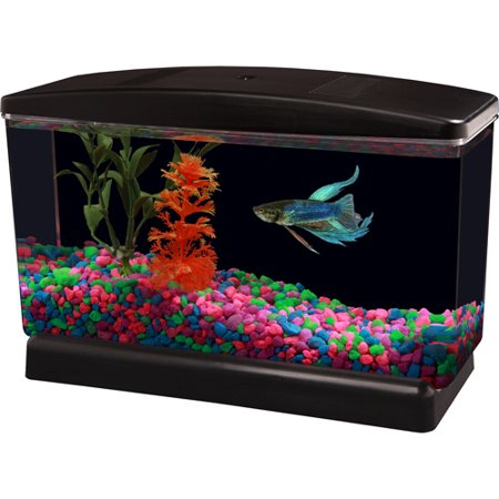 Aqua culture bettaview aquarium 5 gallon for How much are betta fish at walmart
