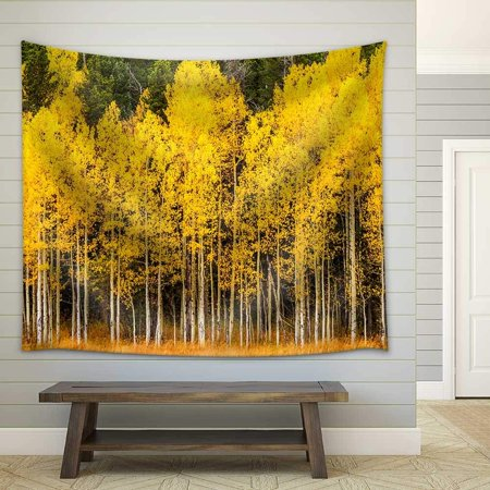 Sunday Afternoon Tapestry (wall26 - Stand of Changing Yellow Aspen Tree in Front of Dark Green Pine Trees in Mountains of Colorado on Fall Afternoon - Fabric Wall Tapestry Home Decor - 51x60 inches)