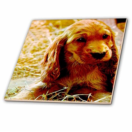 3dRose Irish Setter Puppy - Ceramic Tile, (Irish Tile)