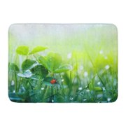 GODPOK Beautiful Nature with Morning Fresh Grass and Ladybug and Clover Leaves in Droplets of Dew Outdoors Rug Doormat Bath Mat 23.6x15.7 inch