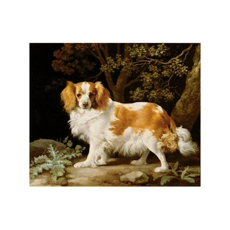 Charles White Art Prints - A Liver and White King Charles Spaniel in a Wooded Landscape, 1776 Print Wall Art By George Stubbs