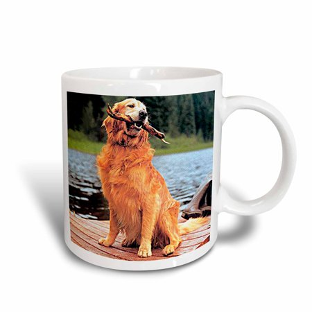 3dRose Golden Retriever, Ceramic Mug, (Retriever Ceramic Mug)