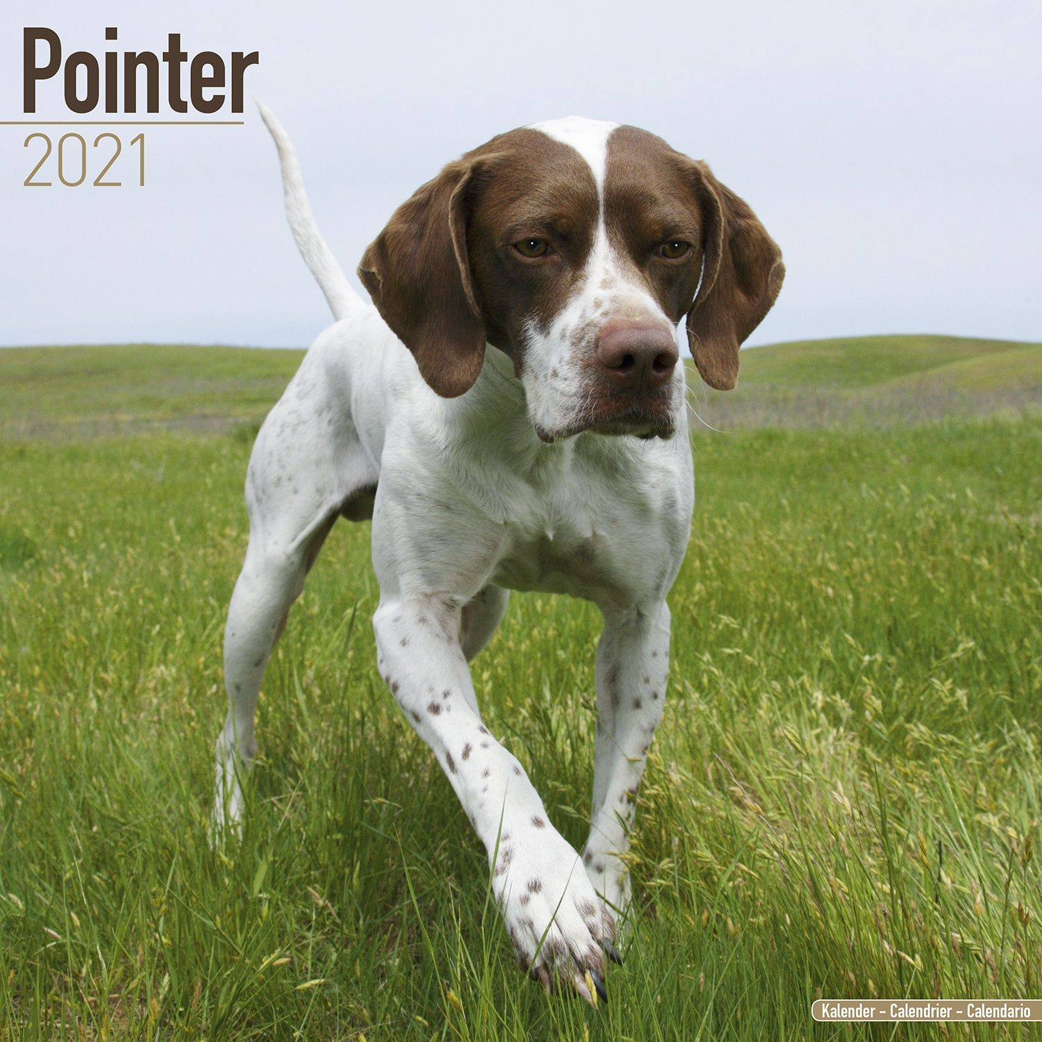Pointer Calendar 2021   Pointer Dog Breed Calendar   Pointer s