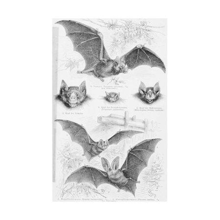 ilustration of six types of bats print walmart com